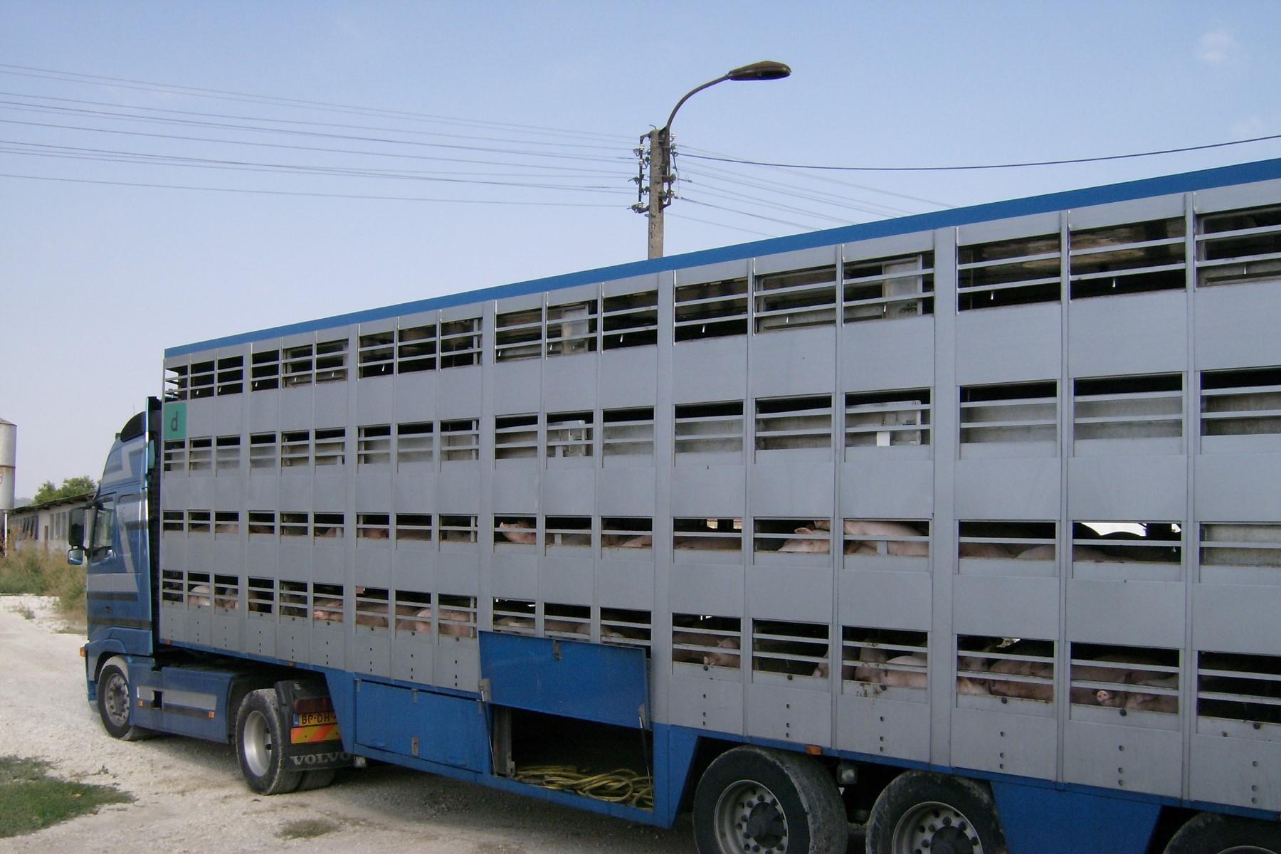 Aktuelle Fragestunde   Tiertransporte in Drittländer